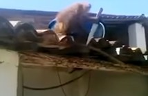 Drunk monkey steals knife freaking people out