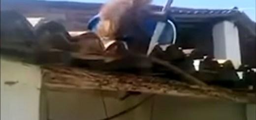 Drunk belligerent monkey battles locals with kitchen knife