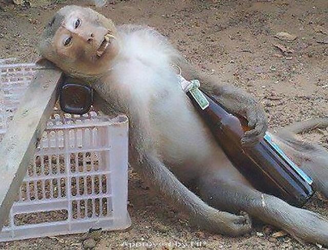 Drunk monkey stooper