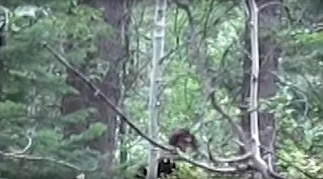 Bigfoot captured on camera in Idaho by hunters
