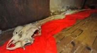 Dragon skeleton found in China