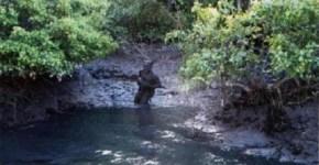 The infamous Bahia Horned Beast photo