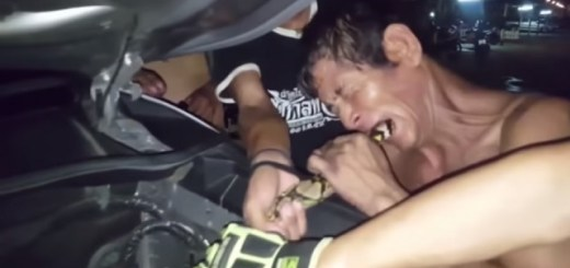 Thailand man bites tail of python trapped inside truck engine