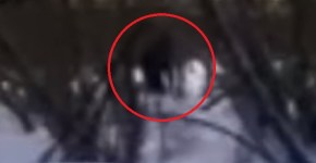 Bigfoot with baby near Kemerovo Russia