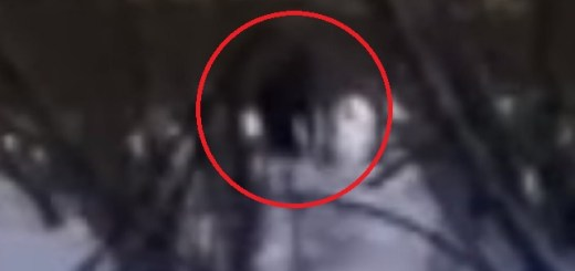 Russian boys record Bigfoot with baby near Ural Mountains