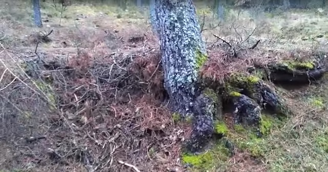 Real goblin filmed inside of tree