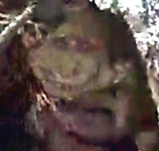 Small goblin peeks from tree hole