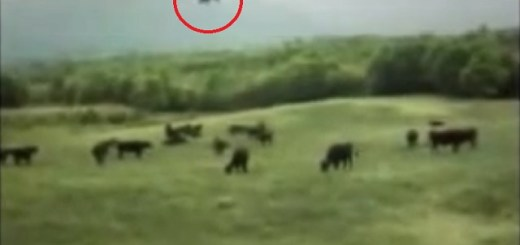The infamous UFO cow abduction video