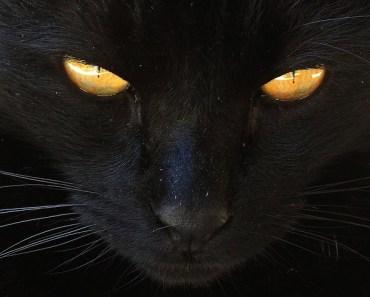The Washington D.C. black cats of doom