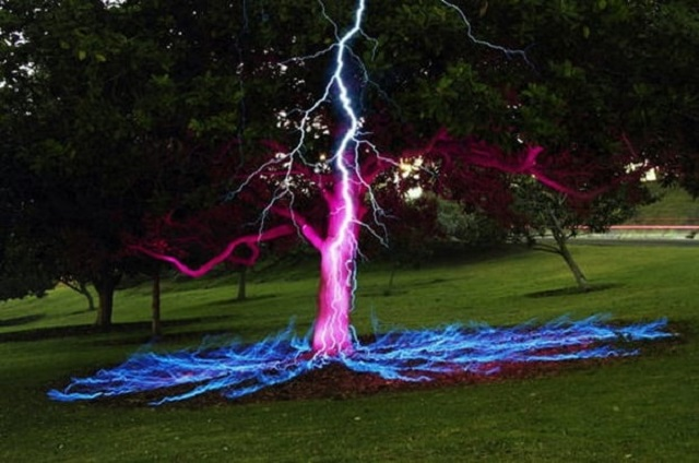 Lightning hits tree