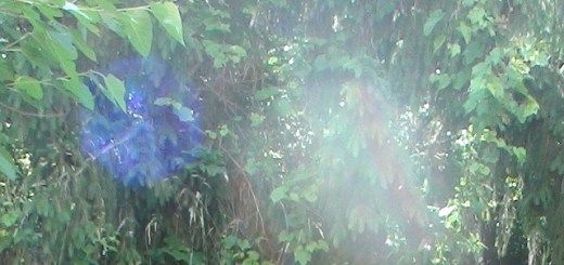 Misty orbs photographed outside of nursing home
