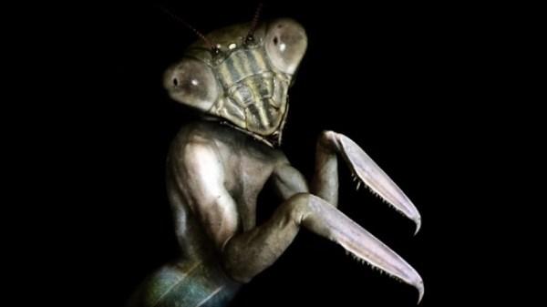 Mantis Man
