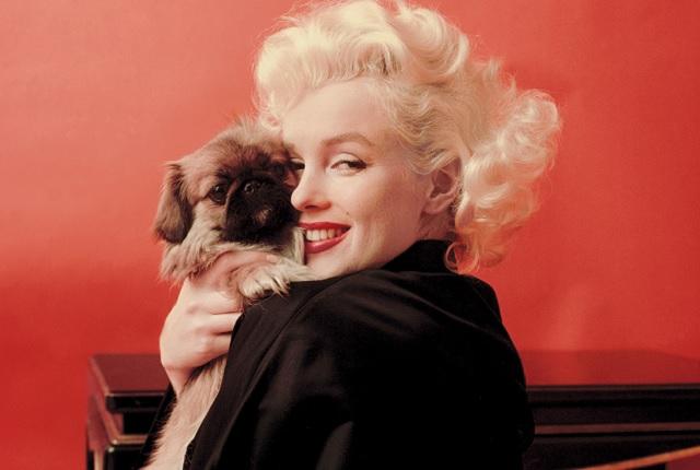 Marilyn Monroe and dog
