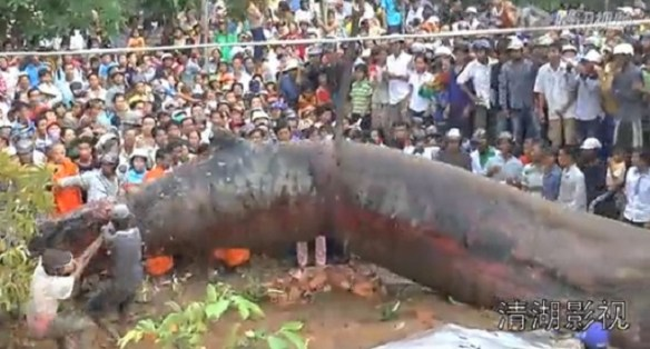 Sea monster discovered in Cambodia