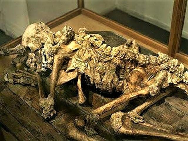 Dragon Man bones Toyko