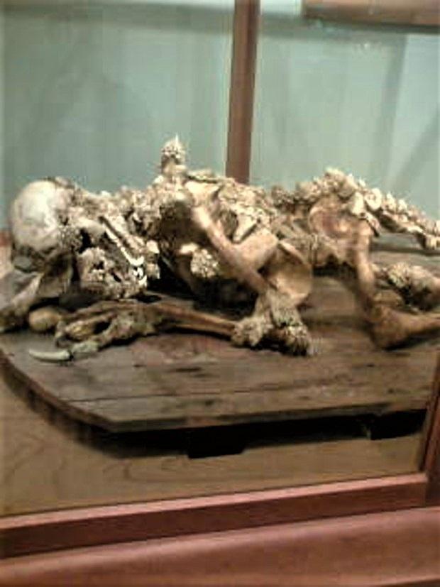 Dragon Man bones back of shop