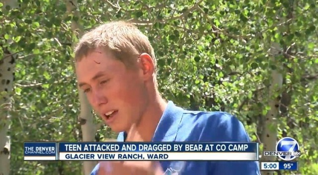 Dylan McWilliams attacked by bear