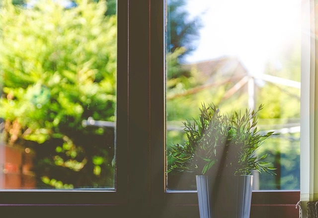 House plant sunlight