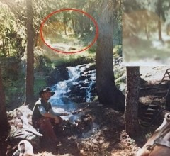Bigfoot Photograph Colorado