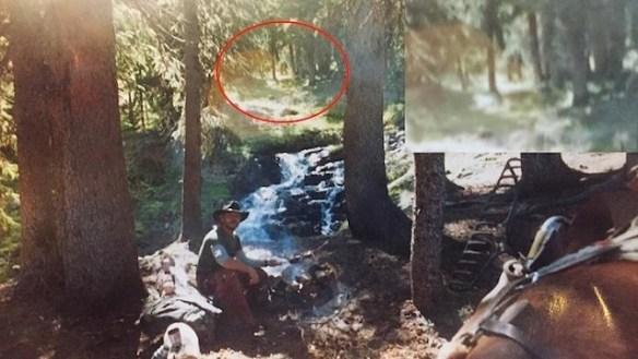 Bigfoot Photograph Colorado
