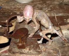 Small alien creature found in Mexican barn