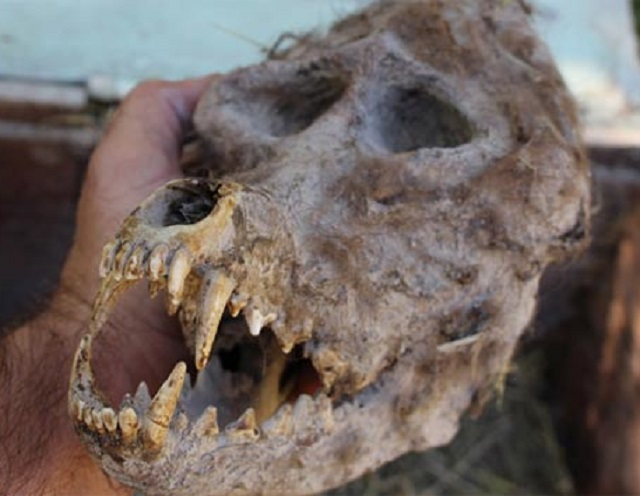 Werewolf skull found in Bulgaria