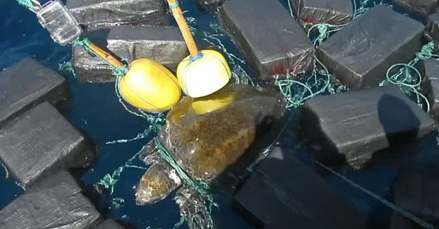 Turtle with cocaine found in ocean