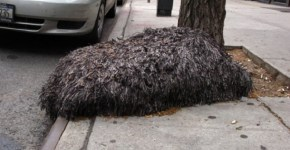 Hairy blob creature on New York City street