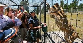 Lehe Ledu Wildlife Zoo feeding