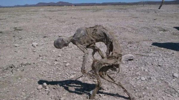 Unidentified Dried Up Mummy Found In Remote Mexican Desert