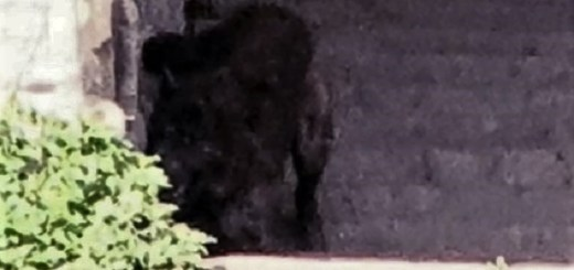 Woman Snaps Photograph Of Hellhound In The Shadows