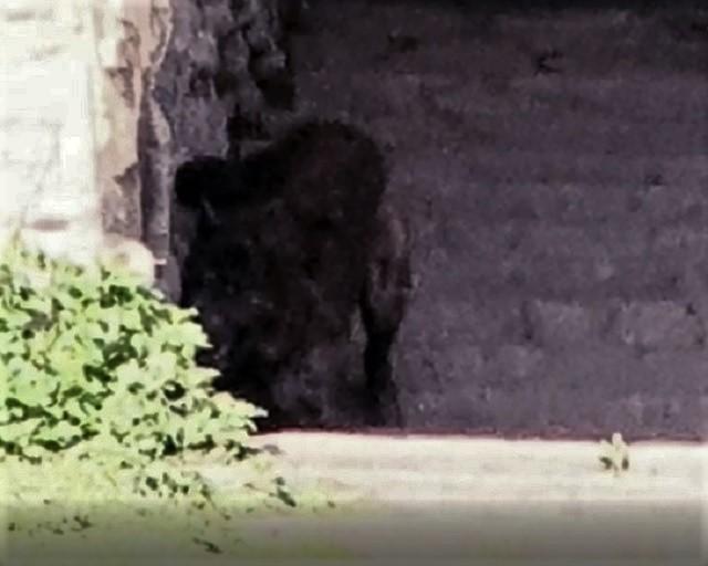Demon dog Gytrash photographed England