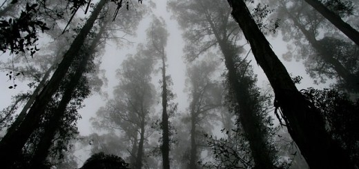 Park Rangers Encounter Ghost In The Woods