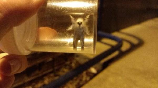 Fae moth fairy found