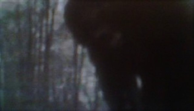 Trap Catches Bigfoot On Camera