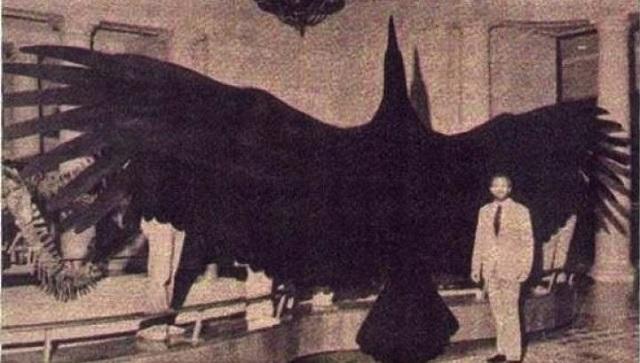 Alien bird 1927 Australia