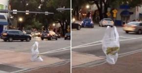 Plastic bag moves like it is alive