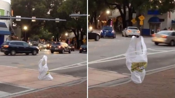 Plastic bag moves like it is alive
