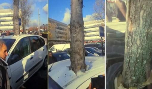 Tree growing inside car