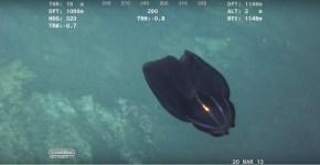 alien creature Africa underwater