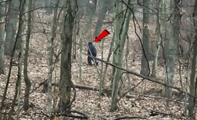 Ohio Bigfoot recorded