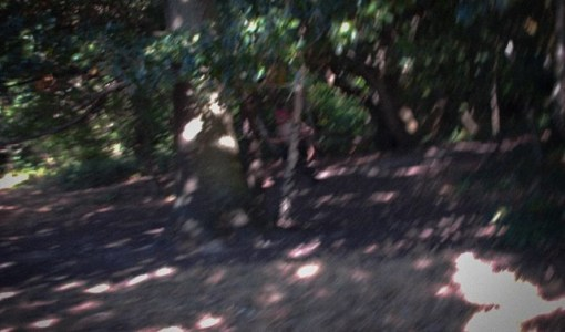 UK Humanoid Photograph Forest