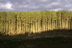 Traditional Photography Evergreen Forest