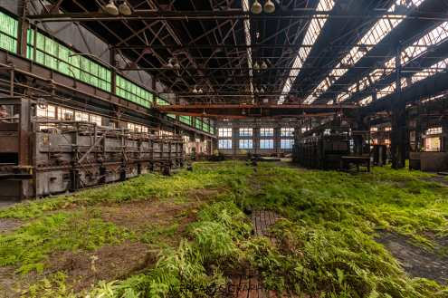 Abandoned New York State Steel Mill Growth