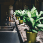 Houseplants