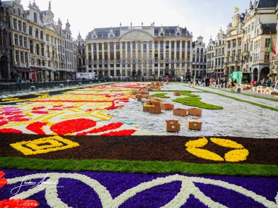 Flower Carpet Grand Place in Brussels. For its 20th edition, this year the famous flower carpets 150 years of Belgian-Japanese friendship. This carpet of flowers custom 75m 24m and is directed by around 600,000 begonias. Brussels, August 12, 2016, Belgium