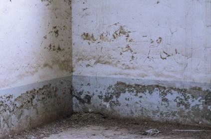 The pigeon church muur