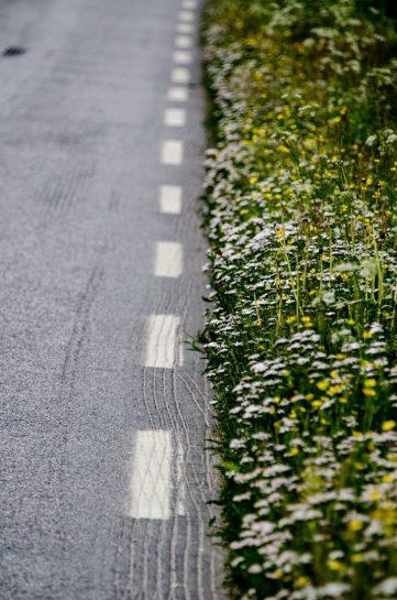 Noorse flora bloemen langs de weg