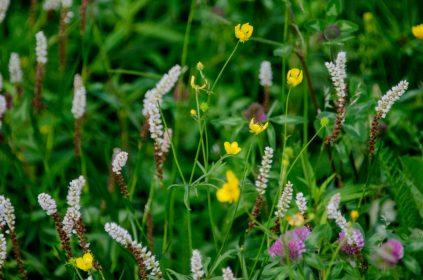Noorse flora gemengde bloemen