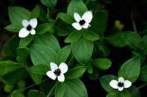 Noorse flora witte bloemetjes